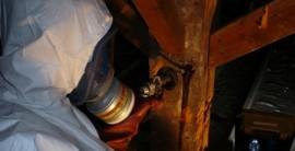 champignon, préservation, Henriques David